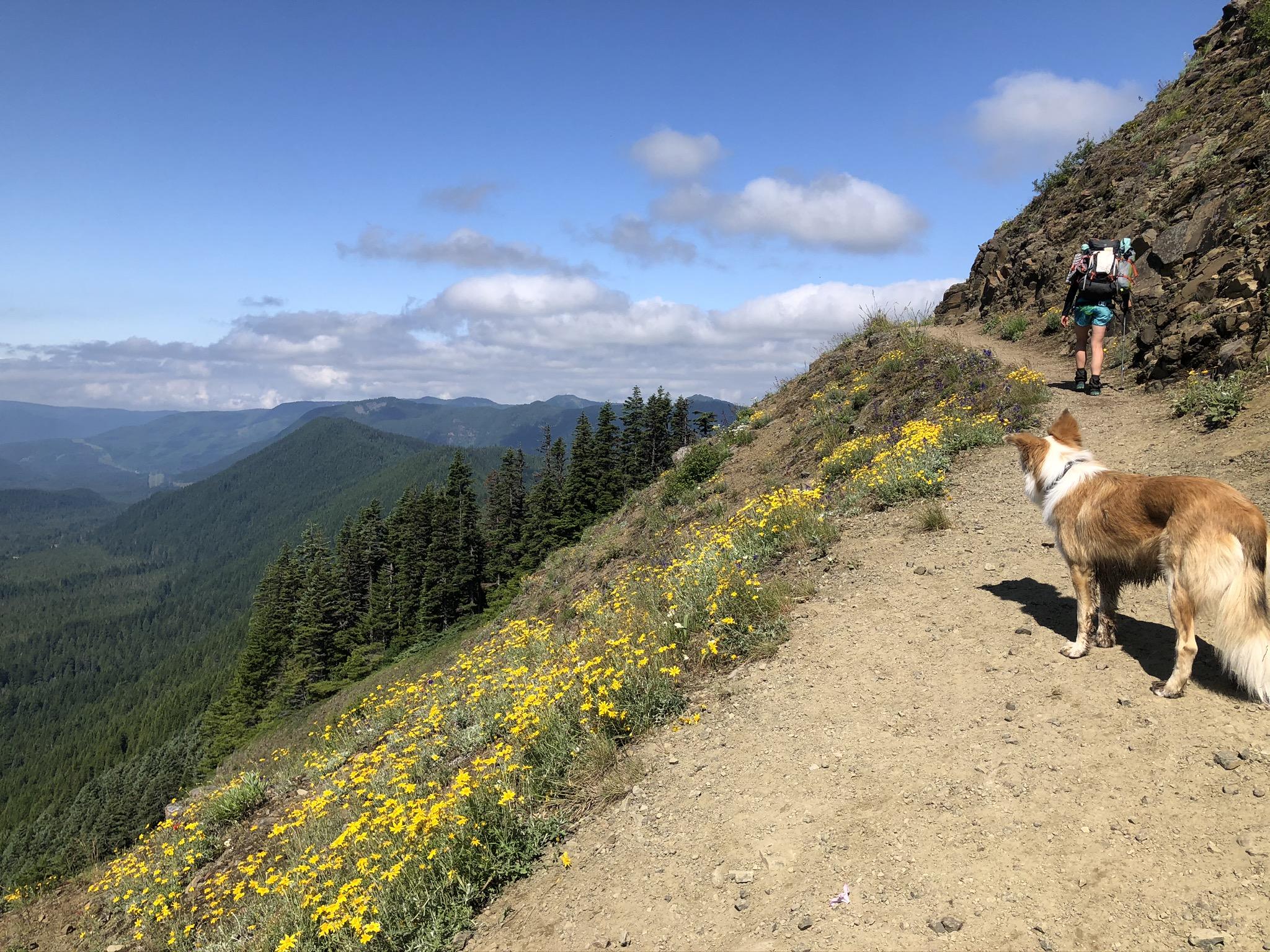 timberline trail circumnavigation